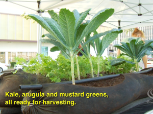 Hawaiʻi's First Urban Rooftop Farm