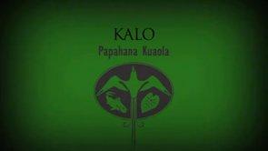 Kalo – Kealoha Domingo