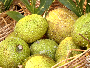 Hoʻoulu Ka ʻUlu Festival 2011 #breadfruitfestival #sustainability