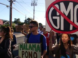 #IdleNoMore Hawaiʻi, Label GMO & Pounding Kalo