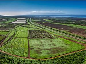 Maui Supports GMO Moratorium