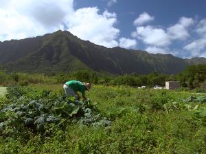 Mahiʻai Matchup 2015