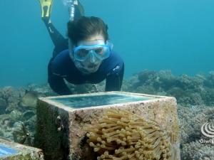 Reef Conservation Snorkeling Trails