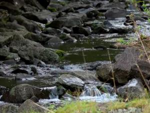 7 of 27 East Maui Streams Fully Restored
