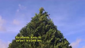 Helemano Trees