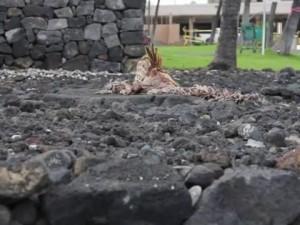 Wahi Koʻikoʻi: Kamakahonu