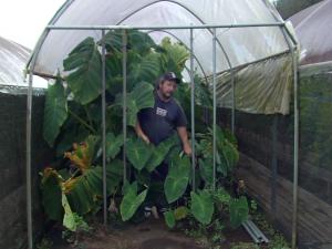 WOW Farm: The Future of Mahi ʻai