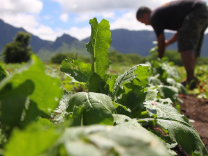 Mahiʻai Match-Up: Calling All Farmers